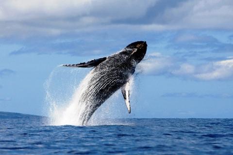 Balene ci pensa Pornhub_welovemercuri.jpg