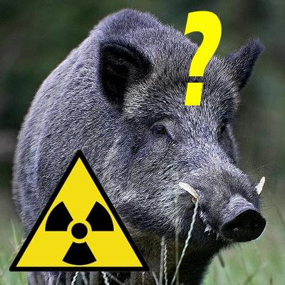 Cinghiali radioattivi_valsesia_welovemercuri.jpg