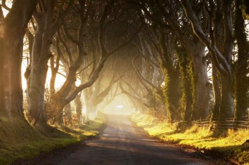 Dark Hedges_ Irlanda_ Nord_Approdo del Re.jpg