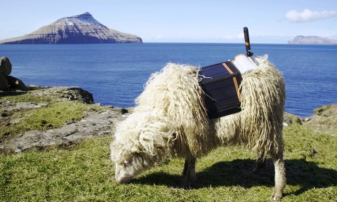 Isole-Faroe-Sheep-View_welovemercuri.jpg