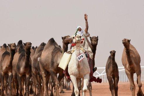 King Abdulaziz Camel Festival_welovemercuri.jpg