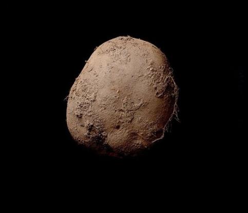 La Patata di Kevin Abosch.jpg