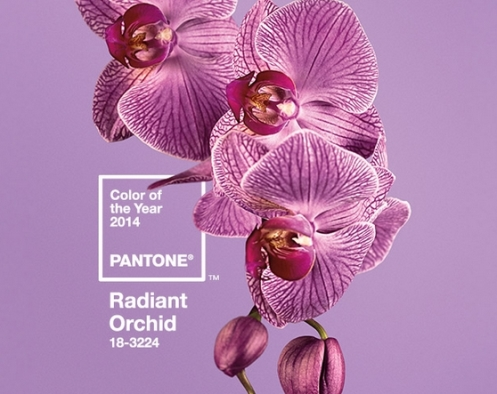 Radiant Orchid.jpg