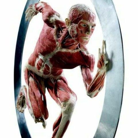 The Human Body Exhibition_Gunther von Hagens_welovemercuri.jpg