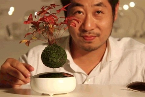 air_bonsai_welovemercuri.jpg