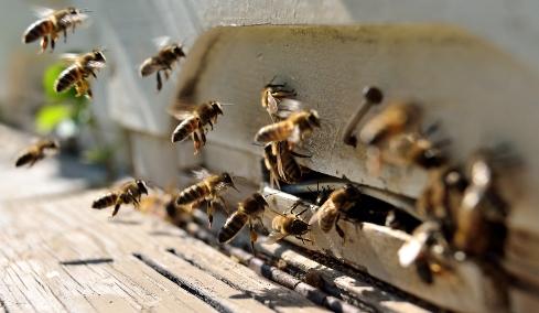 api antiterrorismo_welovemercuri.jpg