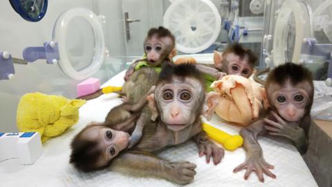 cina_scimmie_clonate_welovemercuri.jpg