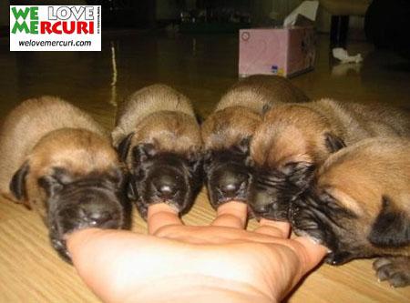 cuccioletti.jpg