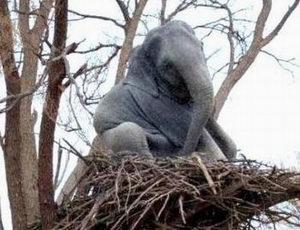 elefante_volante.jpg