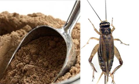 farina-di-grillo-grilli-insetti.jpg