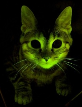 gatto_fluorescente.jpg