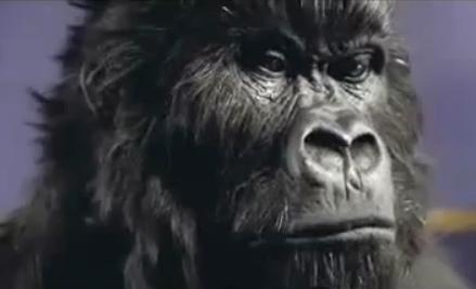 gorilla_spot.jpg