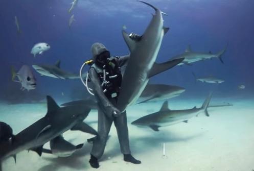 immobilità tonica_squali.jpg