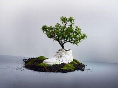 impatto-ambientale-scarpe-biodegradabili-piantare.jpg