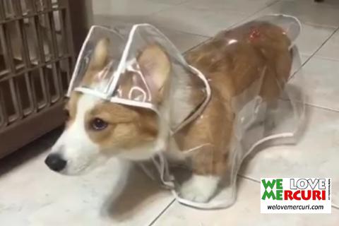 impermeabile per cani_welovemercuri.jpg
