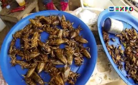 insetti_expo.jpg