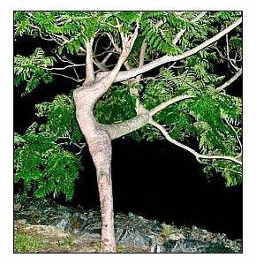 natura_il_lato_sexy.jpg