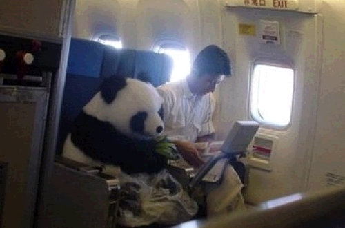panda_air_china_fake.jpg
