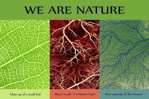 piante_intelligenti.jpg