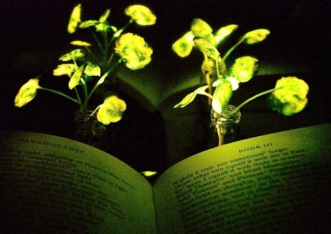 piante_luce_MIT_welovemercuri.jpg