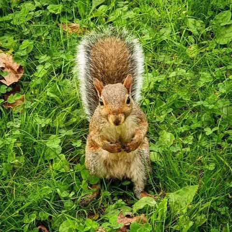 scoiattolo_parco_valentino_welovemercuri.jpg