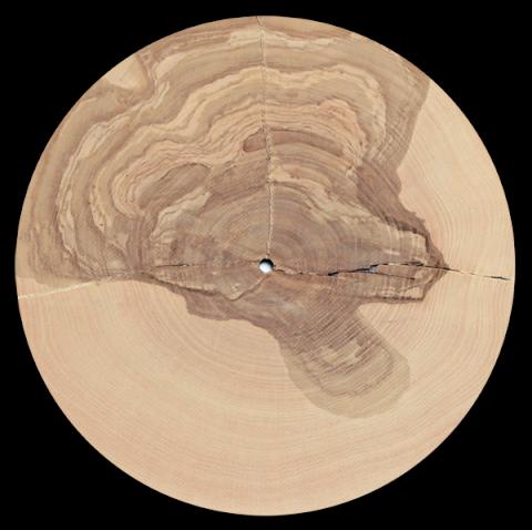 traubeck-years-disco-legno-alberi-musica.jpg