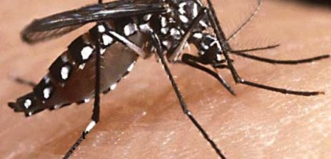 zanzara-ogm-.jpg